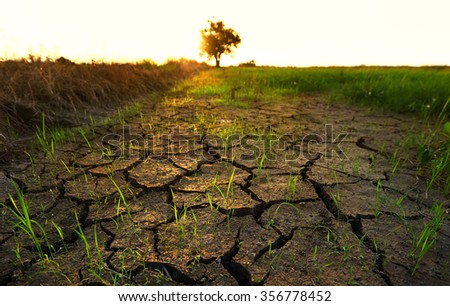 Beautiful view green paddy field during stock photo for Nature and composition of soil
