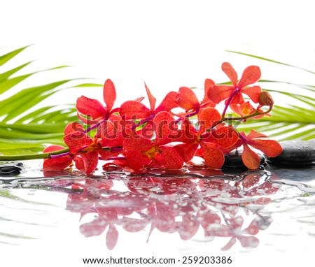 Green palm and wet stones with red branch orchid with reflection