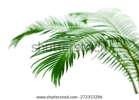 Green palm branches close up - stock photo