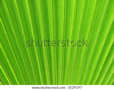 Green Palm Fan Textured Background