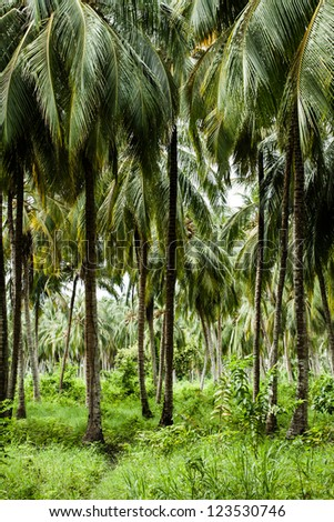Green Palm Forest in Colombian Island ( HDR image )