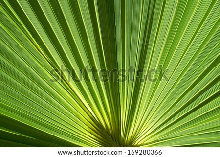 green palm fronds in Greece