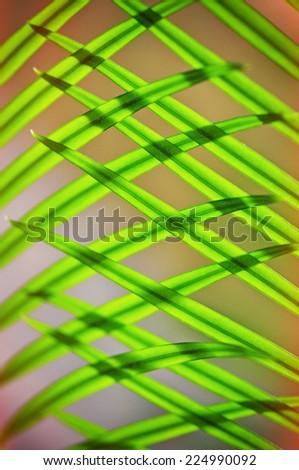 Green palm leaf - stock photo