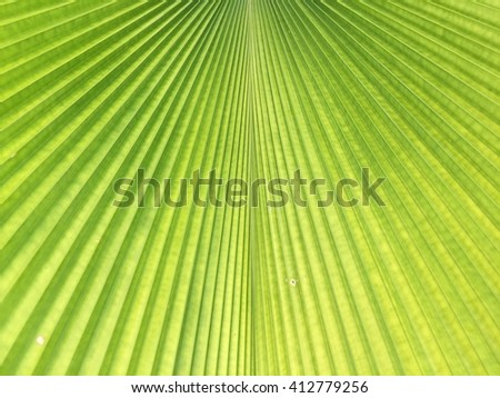 Green palm leaf background texture