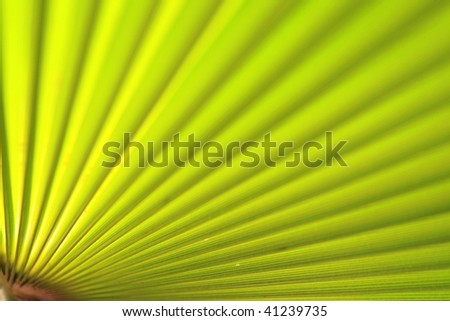 Green palm leaf close up, photographed in a warm evening sunlight