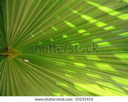 green palm leaf in garden - stock photo