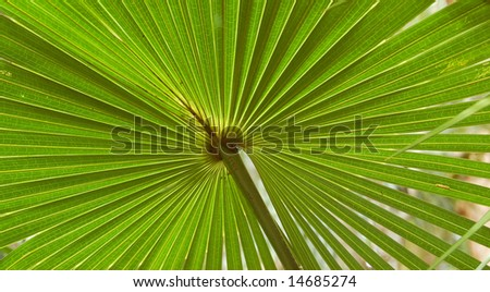 Green palm leaf in rainforest - stock photo