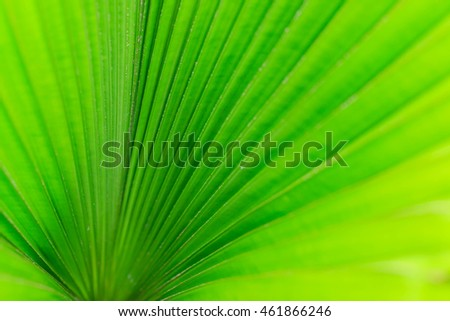 Green palm leaf texture for background.