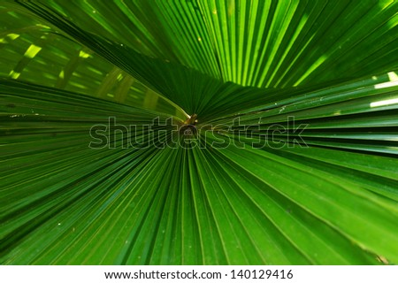 Green palm leaves - stock photo