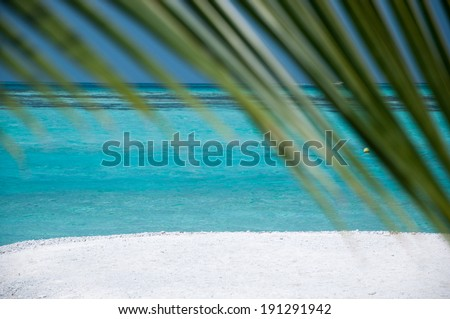 Green Palm Leaves - background for designers - stock photo