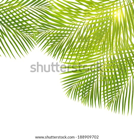 green  palm leaves border  isolated on white backgrouns