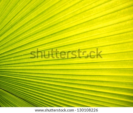 Green Palm leaves in nature - stock photo