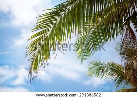 Green palm leaves on  blue sky - stock photo