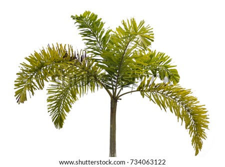green palm leaves on white background, green leaf nature concept, palm tree background for using work space, tree background for presentation, plant