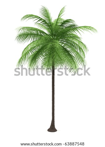 Green palm on a white background. 3d image. - stock photo