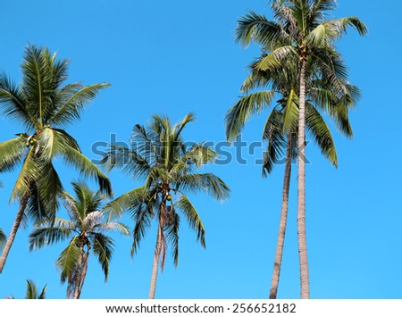 Green palm photographed closeup on the background of blue sky