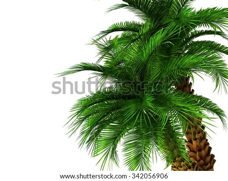 green palm tree isolated on white background.