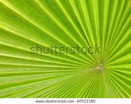 green palm tree leaf as a background - stock photo
