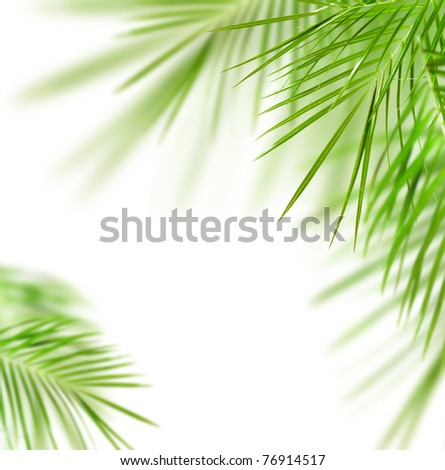 Green palm tree  leafs isolated over white - stock photo