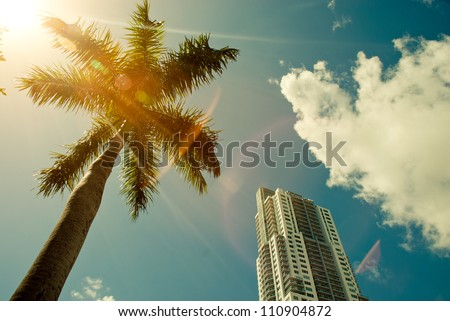 Green palm tree on blue sky background and modern building - stock photo