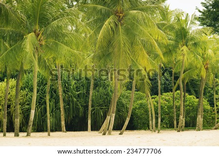 green palm trees on the tropical beach