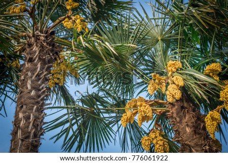 Green palm trees yellow flowers on stock photo image royalty free green palm trees with yellow flowers on the beach mightylinksfo