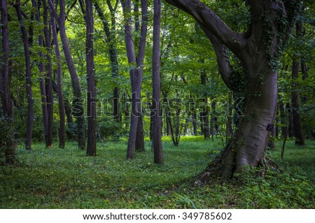 Green park garden in a city.TOKYO JAPAN.  Forest with a fantasy. - stock photo