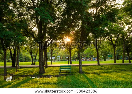 Green park tree outdoor with bench sunlight - stock photo