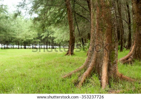 Green park with lawn and big trees. - stock photo