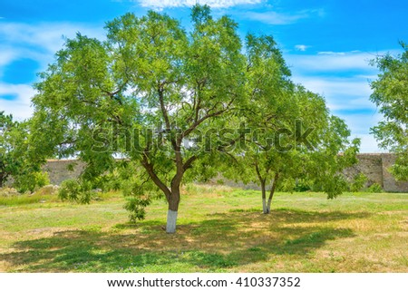 Green park with trees and blue sky on background - stock photo