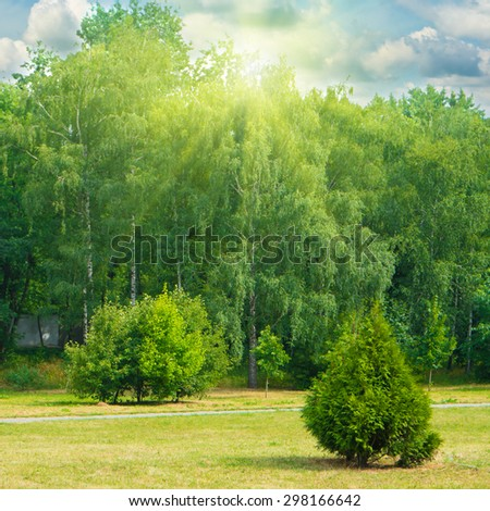 Green park with trees and grass. Sunny landscape with shining sun - stock photo