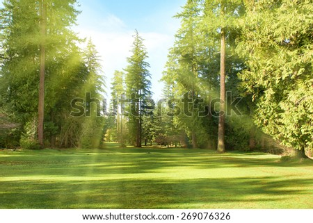 Green park with trees in park under sunny light. Natural spring environment - stock photo