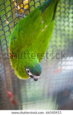 green parrot - stock photo