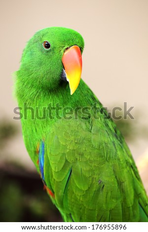 Green parrot looking something in the garden - stock photo