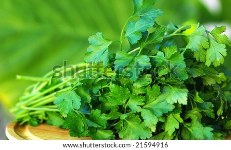 Green  parsley.