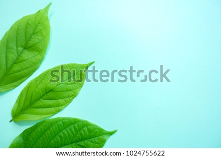 green pastel  background with tree leaves with copy space, flat lay, top view. nature and minimal concept