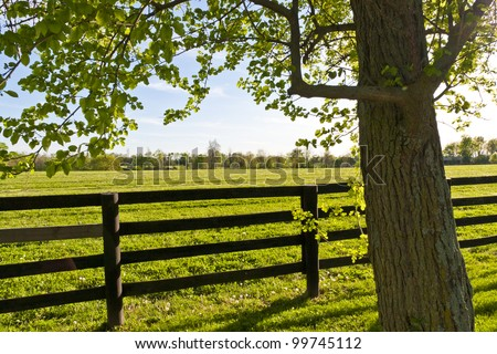 Green pastures of  horse farms at spring - stock photo