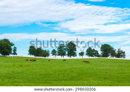 Green pastures of horse farms. Country summer landscape. selective focus - stock photo