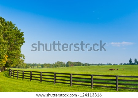 Green pastures of  horse farms. Summer landscape. - stock photo