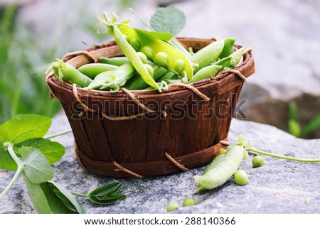 Green peas in a basket made of birch bark - stock photo