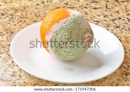 Green Penicillium mold on an orange tangelo - stock photo