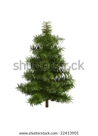 green pine isolated on white background