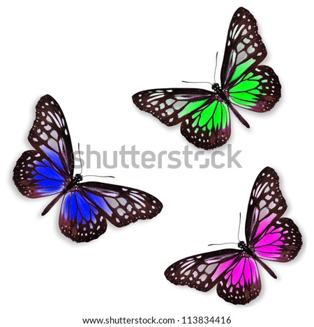 Green pink and blue butterflies isolated on white with soft shadow beneath each - stock photo