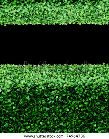 Green plant background on black isolated - stock photo