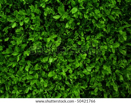 green plant background, young growth - stock photo