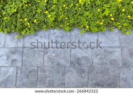 green plant beside stone path walkway background, beautiful eco wallpaper or presentation template - stock photo