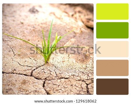 Green plant, cracked earth color palette with complimentary swatches. - stock photo
