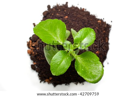 Green plant from top view, isolated - stock photo