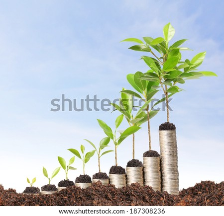 green plant gold the gold coins  - stock photo