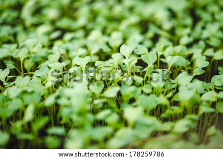 Green plant growing from seed in organic soil - stock photo